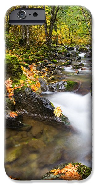 Fall iPhone Cases - Golden Grove iPhone Case by Mike  Dawson