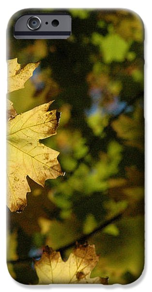 Golden Morning iPhone Case by Trish Hale