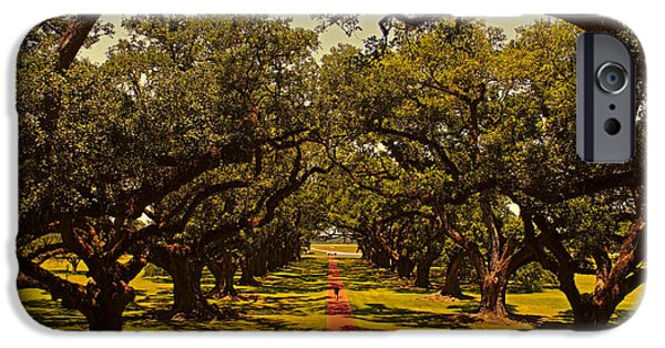 Pathway iPhone Cases - Golden Oaks iPhone Case by Judy Vincent
