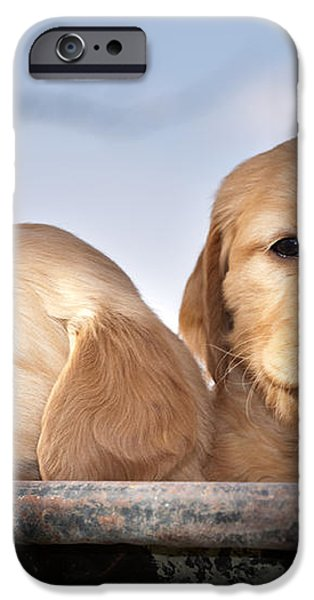 Golden Puppies iPhone Case by Cindy Singleton