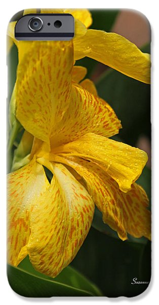 Canna iPhone Cases - Golden Rain iPhone Case by Suzanne Gaff