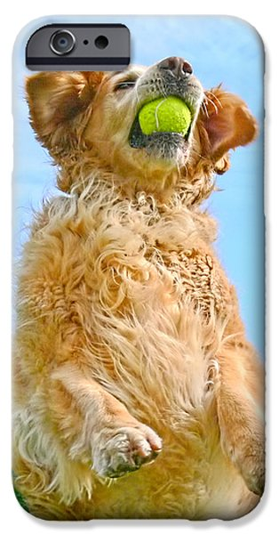 Dog And Tennis Ball iPhone Cases - Golden Retriever Catch the Ball  iPhone Case by Jennie Marie Schell