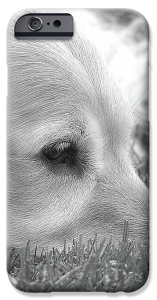 Golden Retriever Dog in the Cool Grass Monochrome iPhone Case by Jennie Marie Schell