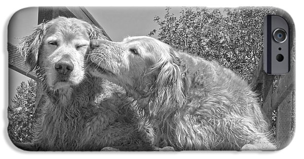 Grey Photographs iPhone Cases - Golden Retrievers the Kiss Black and White iPhone Case by Jennie Marie Schell