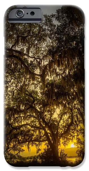 Overhang iPhone Cases - Golden Sunset Through Spanish Moss iPhone Case by Chris Bordeleau