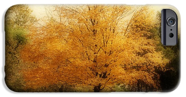 Indiana Landscapes iPhone Cases - Golden Tree iPhone Case by Sandy Keeton