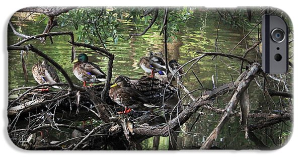 Prescott iPhone Cases - Gone Duck Hunting iPhone Case by Natalie Ortiz