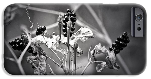 Renewing iPhone Cases - Gone to Seed Berries and Vines iPhone Case by Teresa Mucha