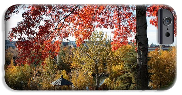 Spokane iPhone Cases - Gonzaga with Autumn Tree Canopy iPhone Case by Carol Groenen