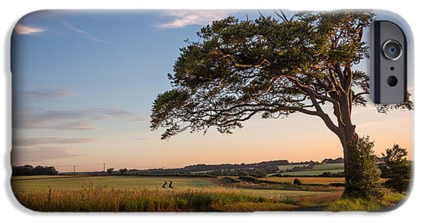 Lone Tree iPhone Cases - Good looking tree iPhone Case by Ian Hufton