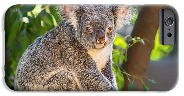 Koala iPhone Cases - Good Morning Koala iPhone Case by Jamie Pham