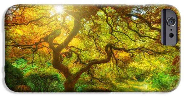 Tree Art Print iPhone Cases - Good Morning Sunshine iPhone Case by Darren  White