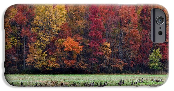 River View iPhone Cases - Goose Season iPhone Case by Skip Willits