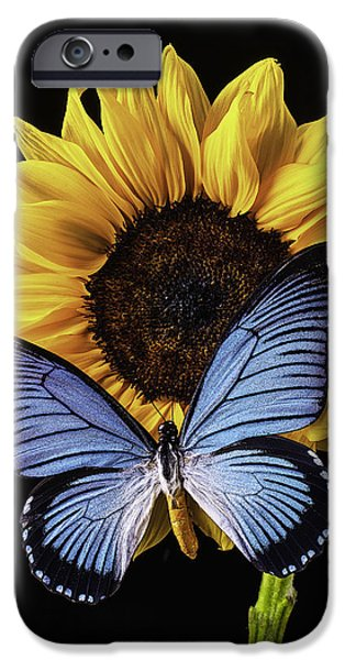 Insects Photographs iPhone Cases - Gorgeous Blue Butterfly iPhone Case by Garry Gay