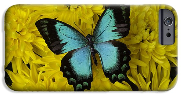 Insects Photographs iPhone Cases - Gorgeous Butterfly iPhone Case by Garry Gay