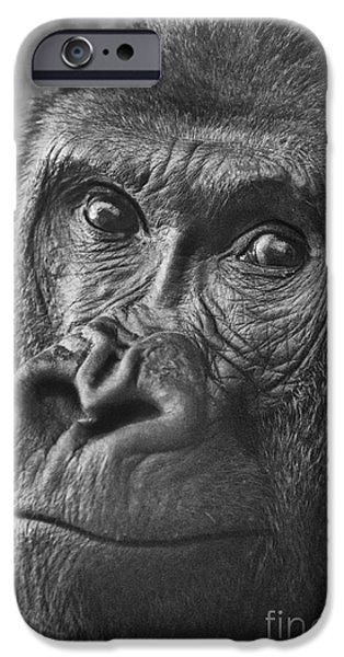 Monotone iPhone Cases - Gorilla Portrait iPhone Case by Jamie Pham