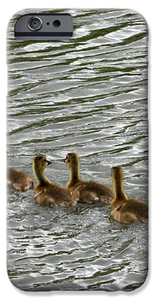 Got All Your Ducks In A Row iPhone Case by David Dunham
