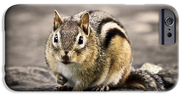 Chipmunk iPhone Cases - Got Nuts iPhone Case by Evelina Kremsdorf