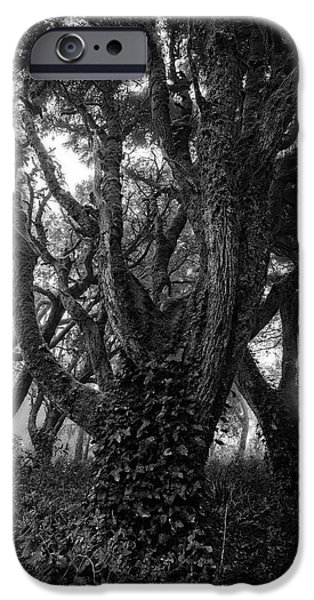Eerie iPhone Cases - Gothic Woods I iPhone Case by Marco Oliveira
