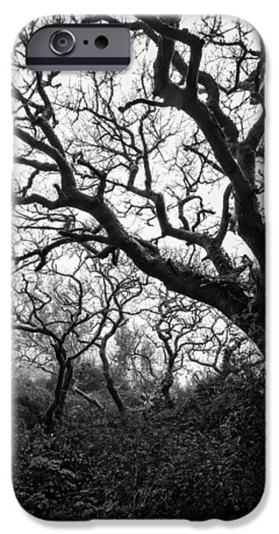 Recently Sold -  - Fog Mist iPhone Cases - Gothic Woods II iPhone Case by Marco Oliveira