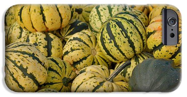 Freedmen iPhone Cases - Gourd Harvest iPhone Case by Jason Freedman