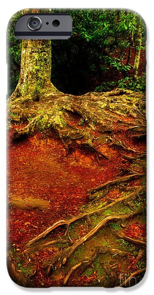Tree Roots iPhone Cases - Grab On And Dont Let Go iPhone Case by Michael Eingle