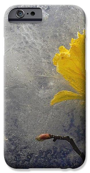 Grace iPhone Case by Carmen Moise
