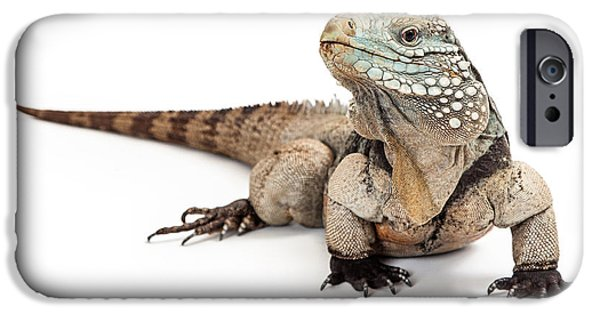 Iguana iPhone Cases - Grand Cayman Blue Iguana Looking to Side iPhone Case by Susan  Schmitz