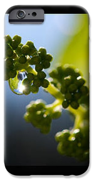 Grape Vines and Water Drops Triptych iPhone Case by Lisa Knechtel