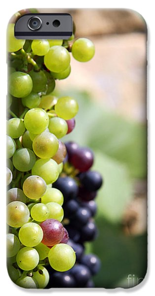 Agricultural iPhone Cases - Grapes iPhone Case by Jane Rix
