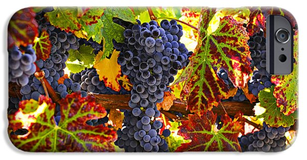 States iPhone Cases - Grapes on vine in vineyards iPhone Case by Garry Gay