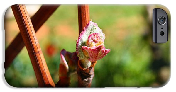 Grapevine Red Leaf iPhone Cases - Grapevine iPhone Case by Marcela Ostojic