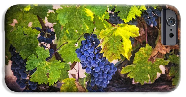 Viticulture iPhone Cases - Grapevine With Texture iPhone Case by Garry Gay