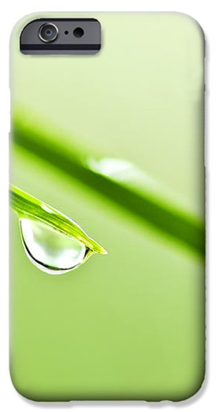 Grass blades with water drops iPhone Case by Elena Elisseeva