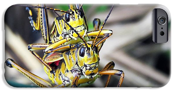 Fauna iPhone Cases - Grass Hoppers  iPhone Case by Mario Carta