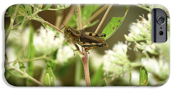 Bugs Pyrography iPhone Cases - Grasshopper iPhone Case by Donna Stiffler