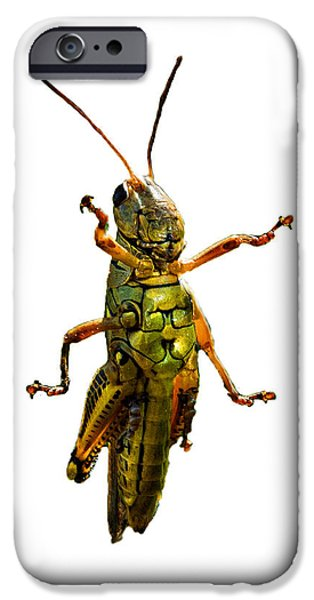 Insects Photographs iPhone Cases - Grasshopper II iPhone Case by Gary Adkins