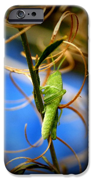 Insects Photographs iPhone Cases - Grassy Hopper iPhone Case by Chris Brannen