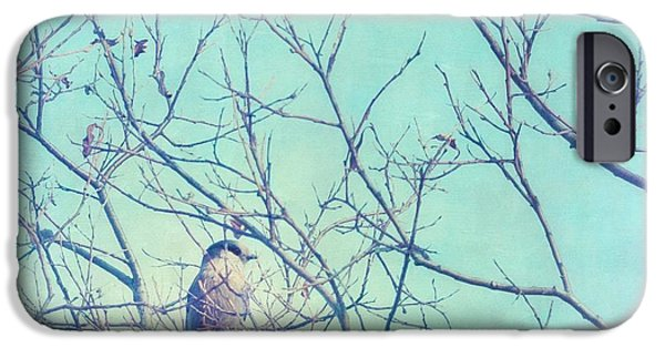 Jay iPhone Cases - Gray Jay In A Tree iPhone Case by Priska Wettstein