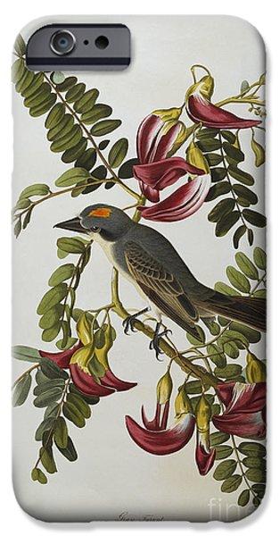 Petals iPhone Cases - Gray Tyrant iPhone Case by John James Audubon