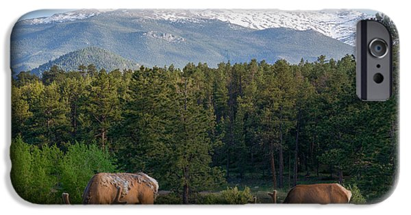 Lady Washington iPhone Cases - Grazing Elk with Longs Peak iPhone Case by Aaron Spong