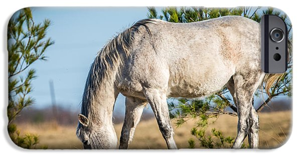 Meadow Photographs iPhone Cases - Grazing Horse iPhone Case by Paul Freidlund