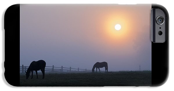 Fog Mist iPhone Cases - Grazing in the Fog at Sunrise iPhone Case by Bill Cannon