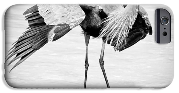 States iPhone Cases - Great Blue Heron BW iPhone Case by Athena Mckinzie