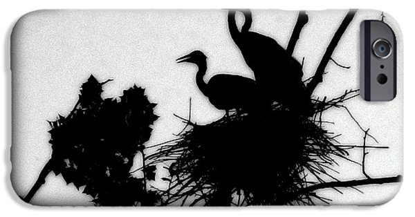 Baby Bird iPhone Cases - Great Blue Heron Chicks Silhouette iPhone Case by Kathy Barney
