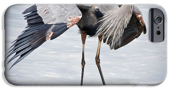 Fauna iPhone Cases - Great Blue Heron IV iPhone Case by Athena Mckinzie