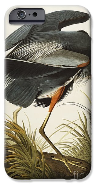 Drawings iPhone Cases - Great Blue Heron iPhone Case by John James Audubon