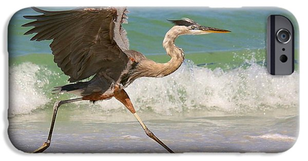 Birds iPhone Cases - Great Blue Heron running in the surf iPhone Case by Myrna Bradshaw
