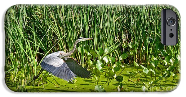 Alga iPhone Cases - Great Blue Heron Takes Flight iPhone Case by Ann Horn