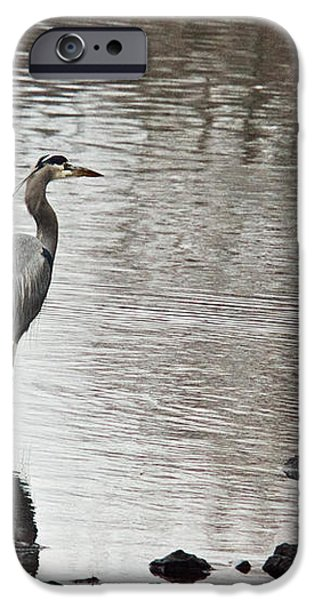Great Blue Heron Wading 2 iPhone Case by Douglas Barnett